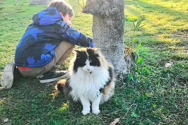 bambino con gatto